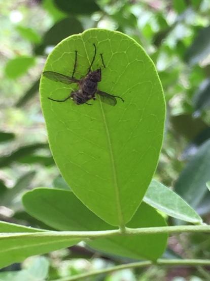 Poor fly!